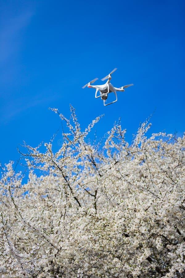 Трутень над цветя деревом стоковые изображения rf