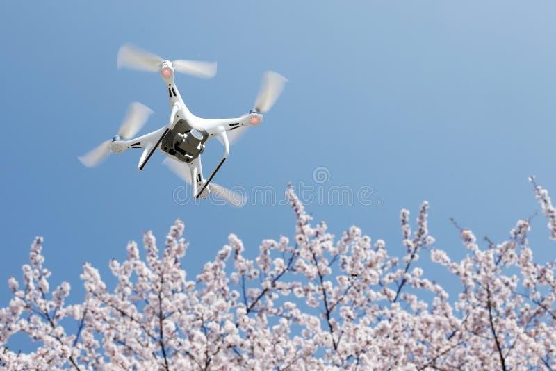 Трутень с вишневым цветом и голубым небом стоковые фотографии rf