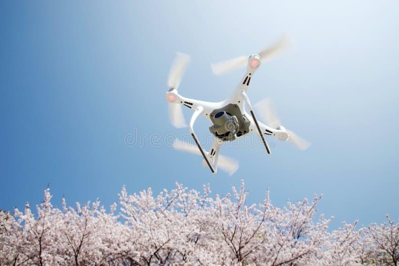 Трутень с вишневым цветом и голубым небом стоковая фотография