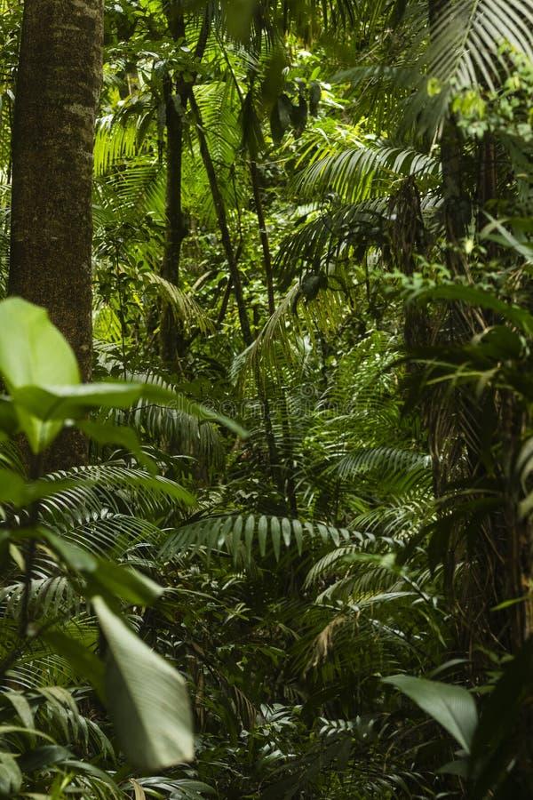 Труднопроходимые деревья и куст джунглей стоковые изображения