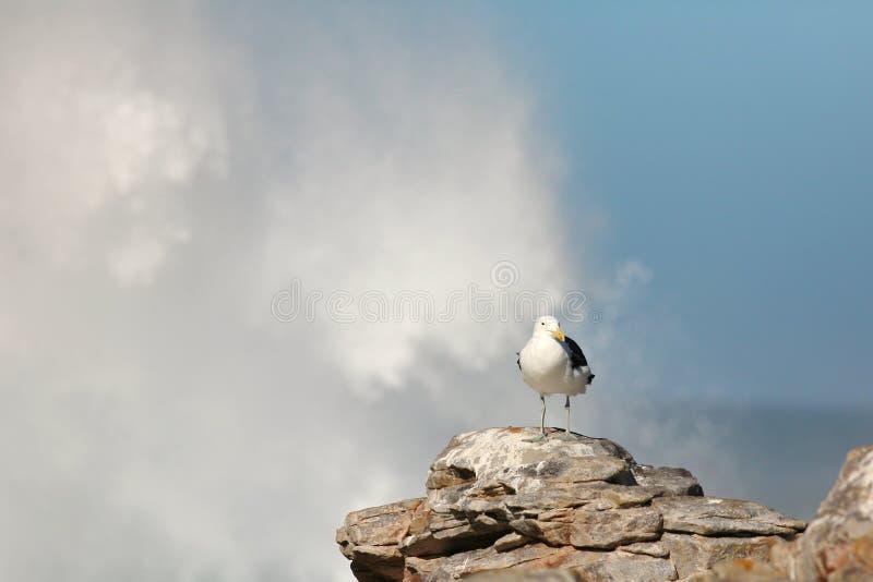 трясет чайку стоковая фотография rf