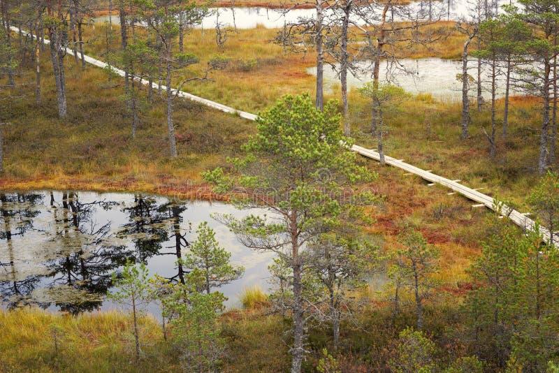 Трясина Viru в национальном парке Lahemaa в Эстонии стоковые изображения rf