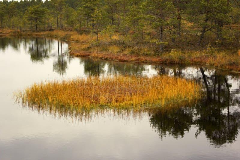 Трясина Viru в национальном парке Lahemaa в Эстонии стоковые фото