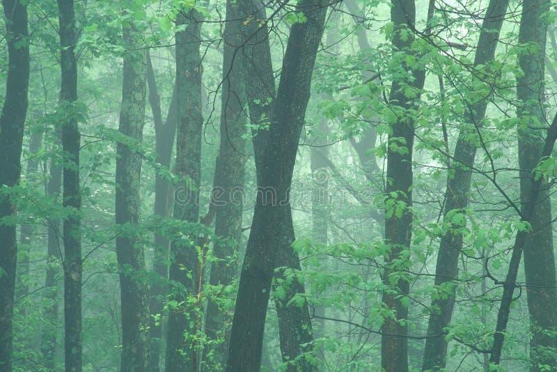 туманная весна утра стоковые изображения rf