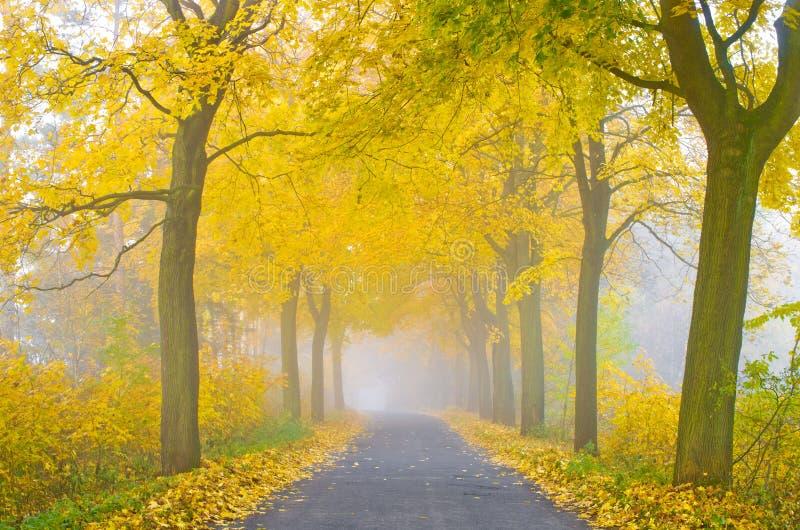 Туманная дорога стоковая фотография rf