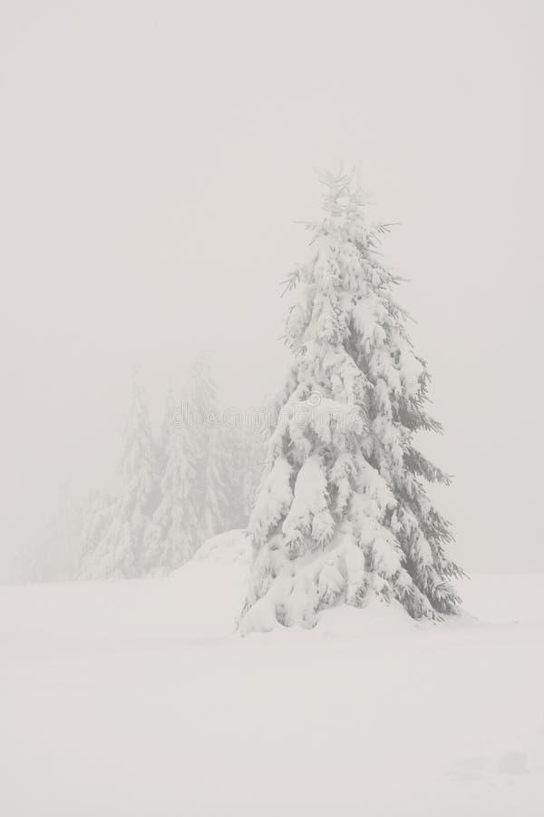 туманная зима стоковые фото