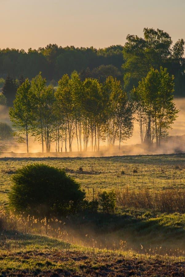 Туманная природа ландшафта весной стоковое фото