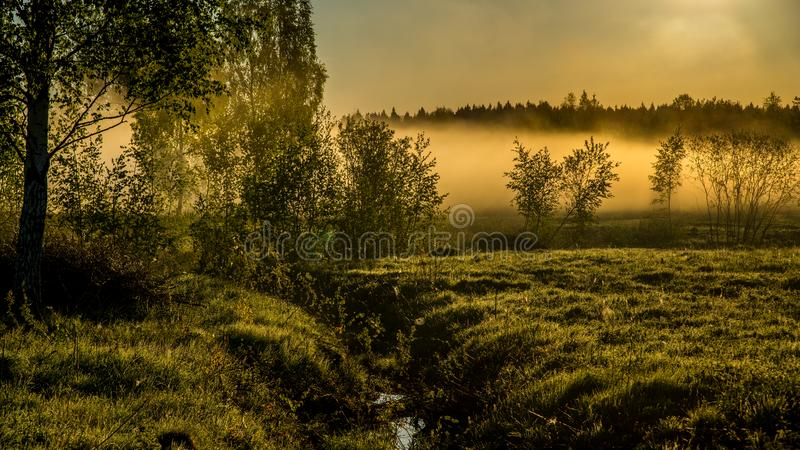 Туманная природа ландшафта весной стоковое изображение