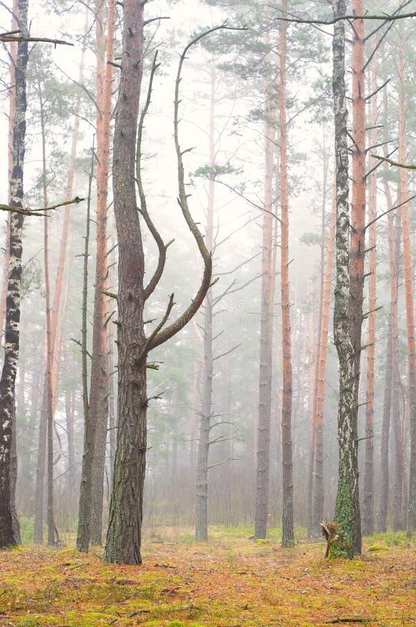 Туманная пуща осени стоковое изображение