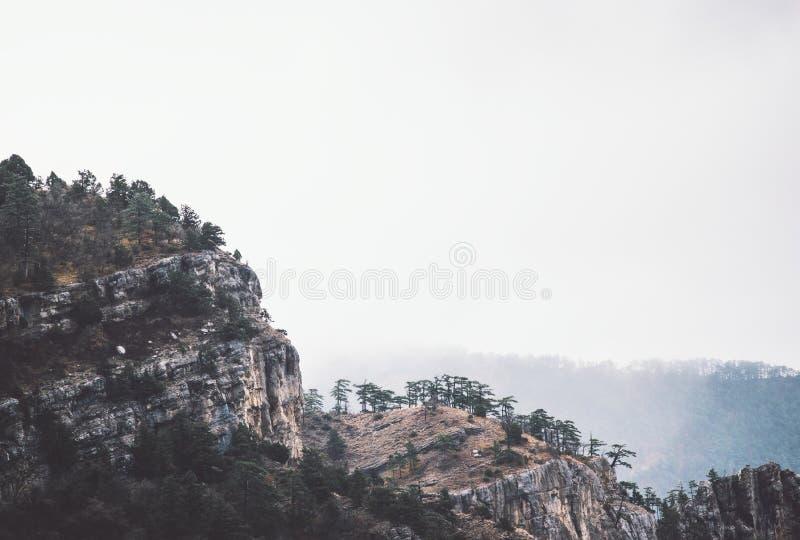 Туманная скала скалистых гор с ландшафтом леса стоковые фотографии rf