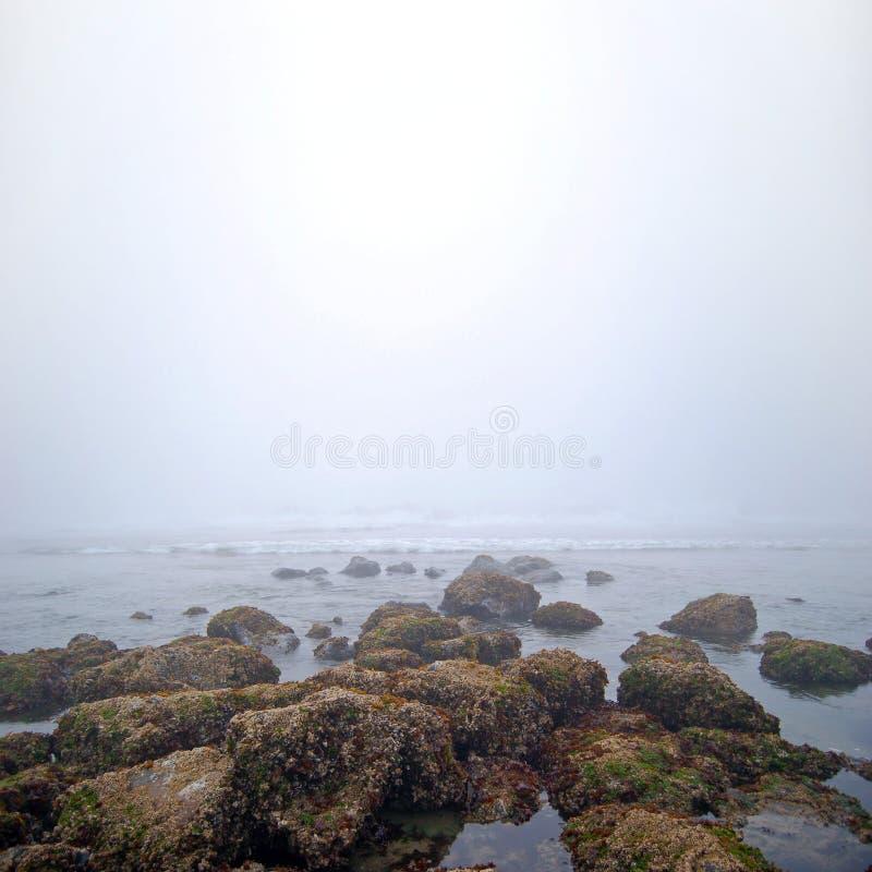 туманнейшая белизна моря утесов стоковое фото