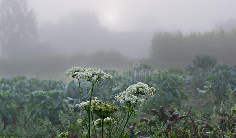 туманнейшее утро До облака солнце смотрит out_ стоковая фотография