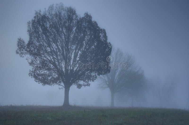 Туманнейшее утро страны стоковые изображения rf