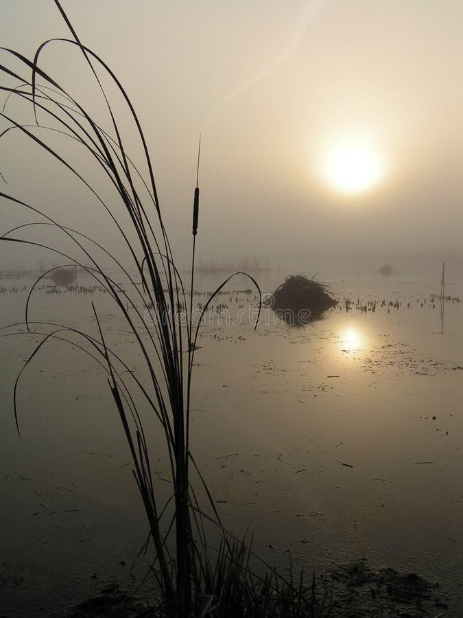 туманнейшее tulchinskom утра озера стоковые изображения