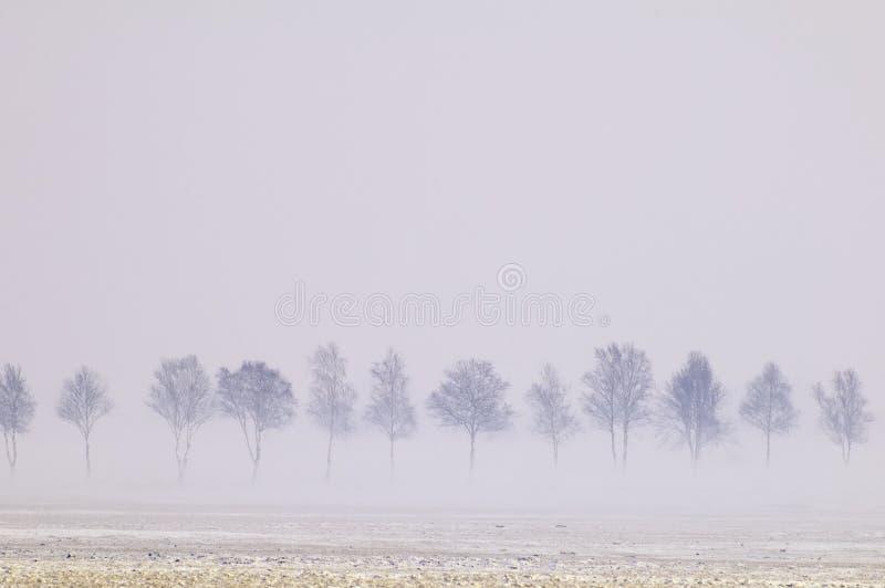 туманнейшие валы стоковая фотография rf
