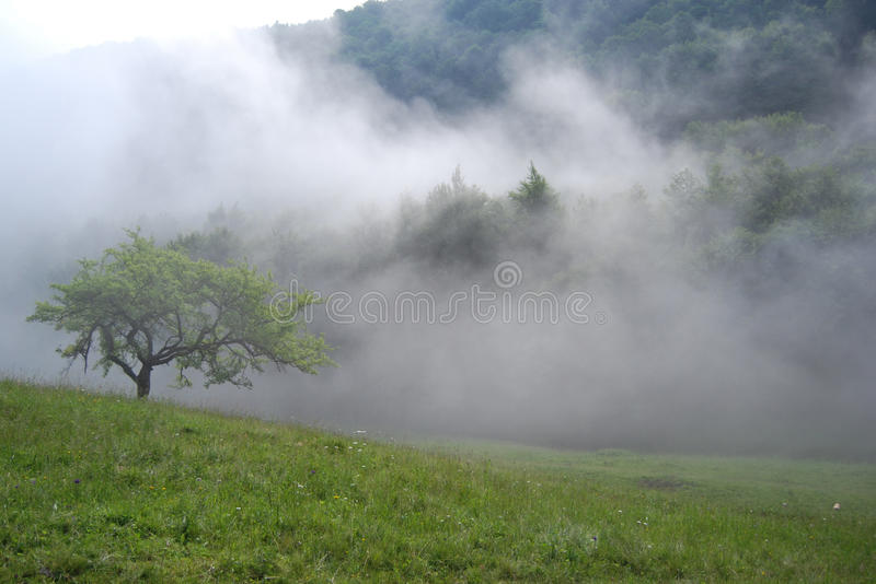 туманнейшие горы утра стоковое фото rf