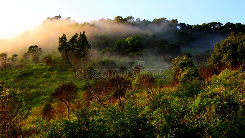 Туманнейшие джунгли стоковая фотография rf