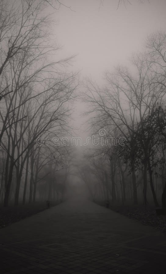 туманнейший парк стоковое изображение