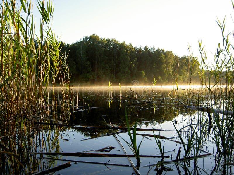 туманнейший пейзаж стоковая фотография rf