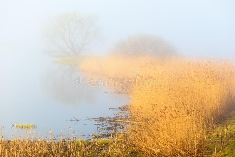 Туманное озеро утра весны стоковое изображение