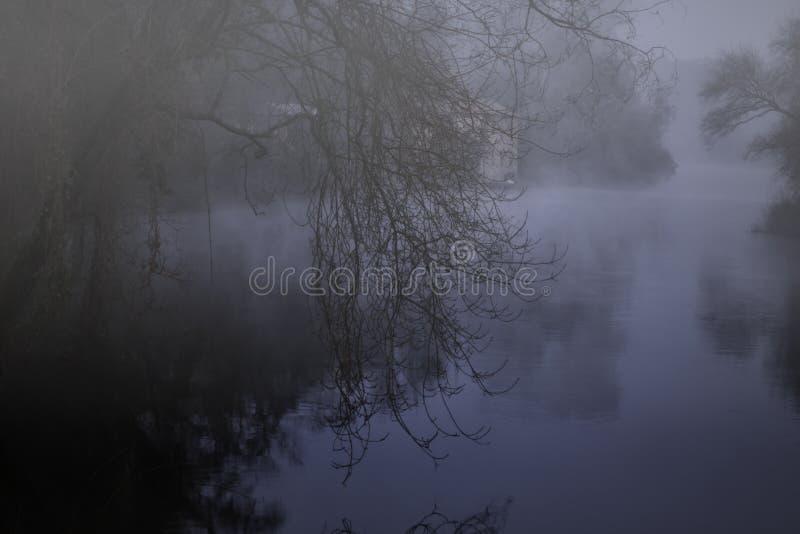 Туманное река леса вечером стоковое изображение
