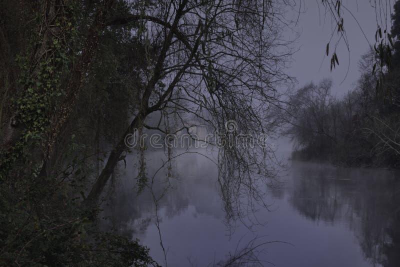 Туманное река леса вечером стоковое изображение rf