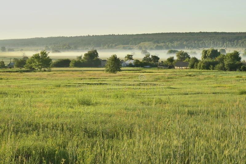 туманное село утра стоковые фото