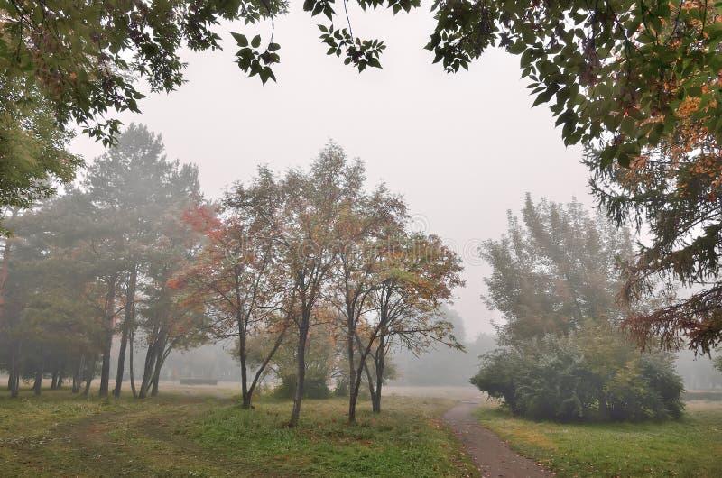 Туманное утро в парке города осени стоковые фотографии rf
