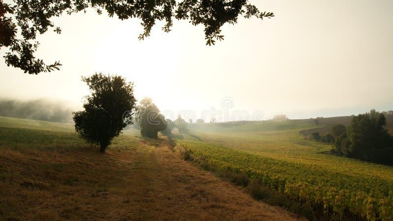 Туманное утро в поле в природе с деревьями и заводами солнцецветов в лекции, южная Франция стоковое изображение rf