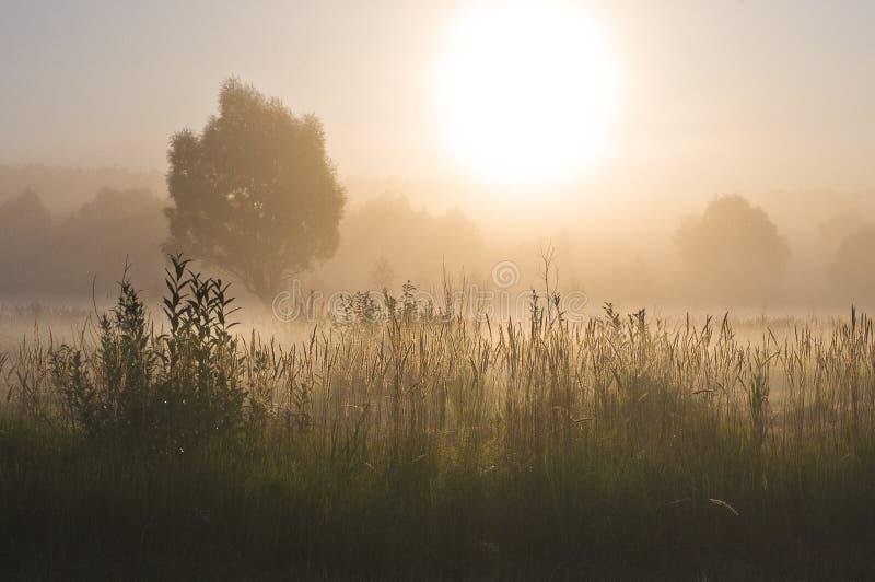 Туманное утро в лугах стоковые фотографии rf