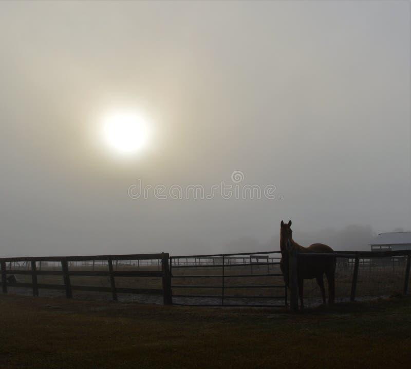 Туманное утро в Флориде стоковая фотография rf