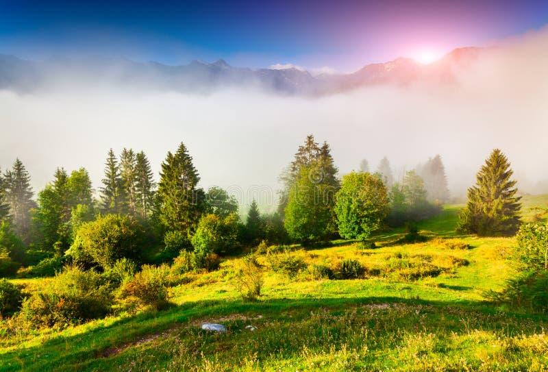 Туманное утро лета в национальном парке Triglav, около Bohi стоковое изображение rf