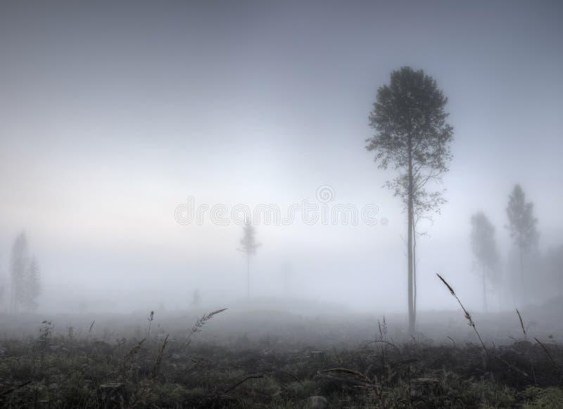 Туманное утро на крае леса стоковая фотография rf
