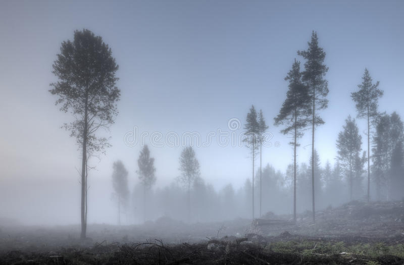 Туманное утро на крае леса стоковое фото rf