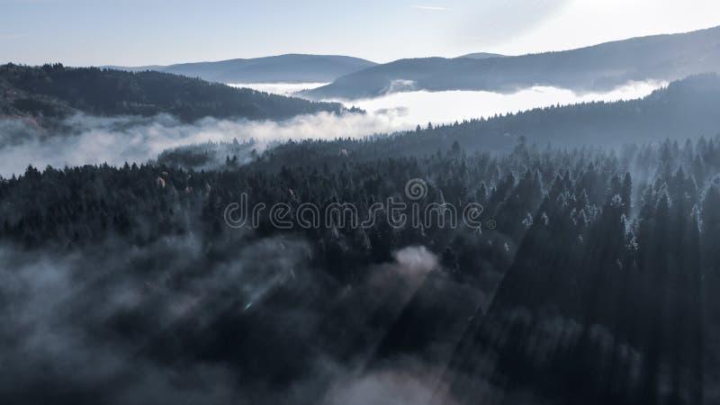 Туманное утро осени в прикарпатских горах Изумляя красота восхода солнца лесов Тонизировать влияние стоковые фото