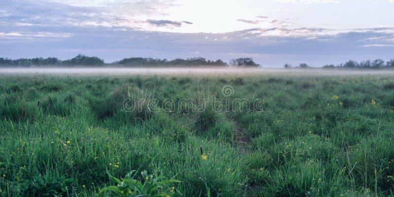 Туманное утро с деревьями клена на переднем плане стоковые фото