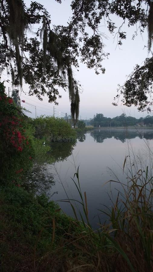 Туманное утро с цаплей и цветками стоковые фото