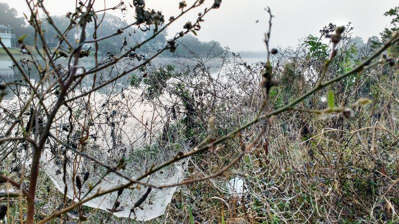 Туманное утро с spiderwebs стоковые фото