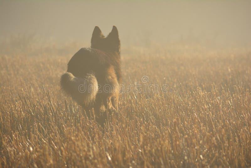 туманное утро стоковые изображения