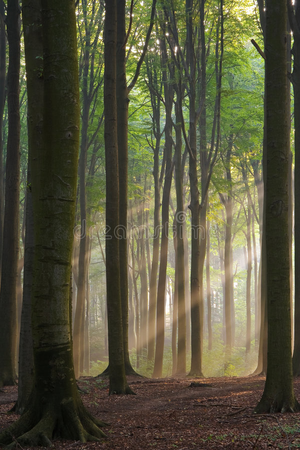 туманное утро стоковое изображение