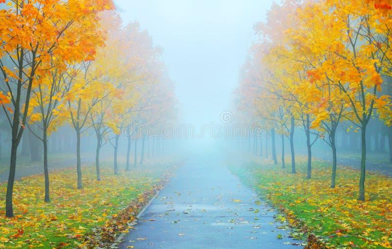 Туманное ater утра осени дождь стоковые изображения