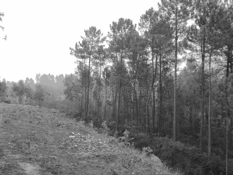 Туманное Florest стоковая фотография