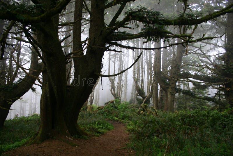 Туманное Forrest стоковое фото rf