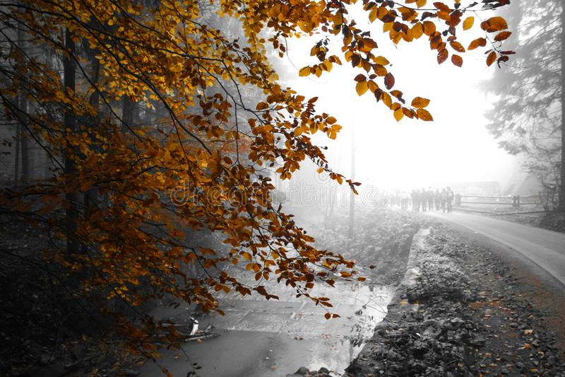 Туманные горы - золотая осень стоковые фото
