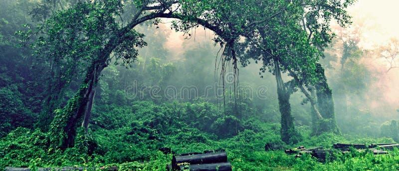 туманные древесины стоковые изображения rf