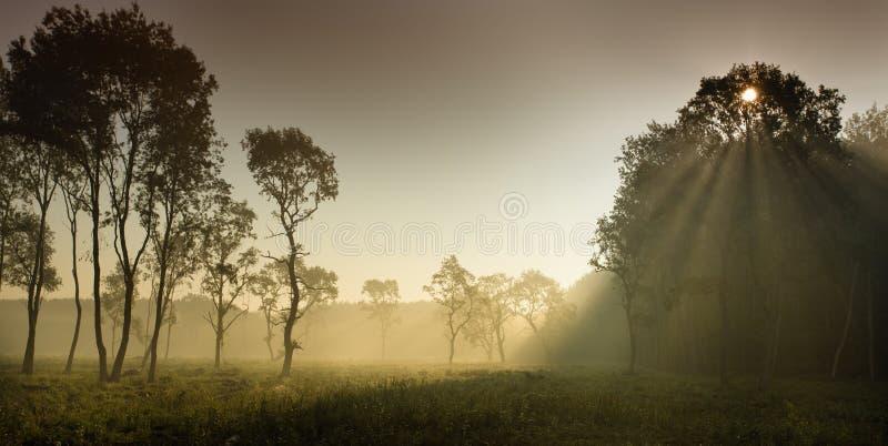 Туманный ландшафт в равнинах стоковые фотографии rf