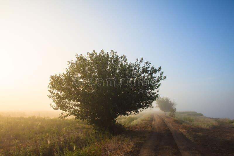 Туманный ландшафт злаковика природы рассвета рано утром стоковое фото