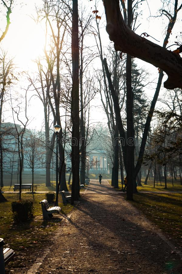 Туманный день в центральном парке весной, Cluj Napoca стоковое изображение rf