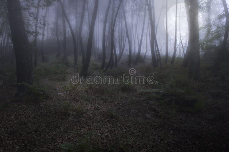 Туманный лес в ноче полнолуния стоковые изображения