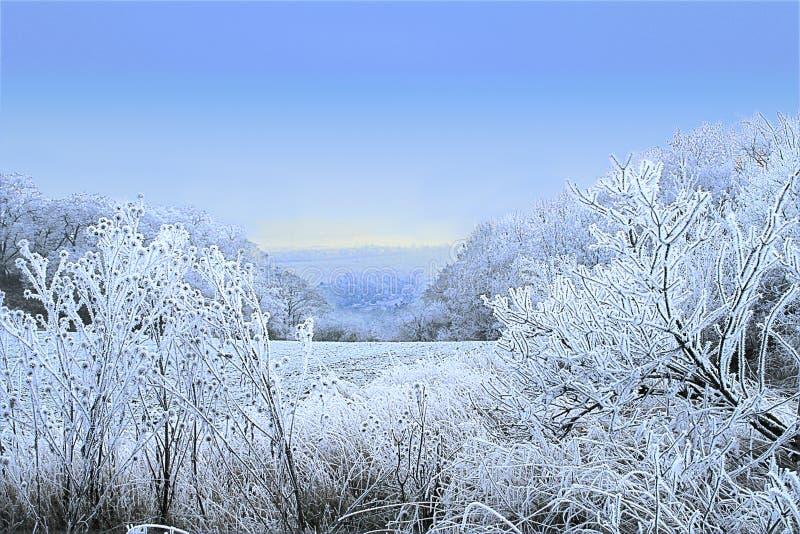 Туманный ландшафт зимы с деревьями, полем и замороженными заводами стоковые изображения rf